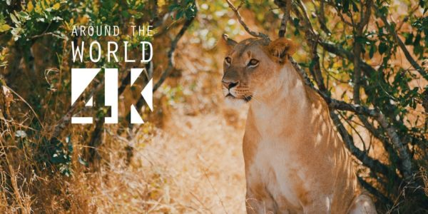 Bestdisplays Tiere Around the World in 4k
